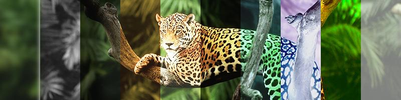 10-filtre-css-jungla-online-baboon